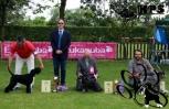Pika-CLUB DOG SHOW 2012,BIS PUPPY 2