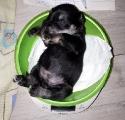 sleep or weighing...20.03.18