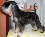 Rita after grooming, 1.9.13.